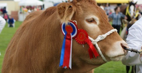Keighley Agricultural Show