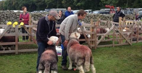Eskdake Sheep